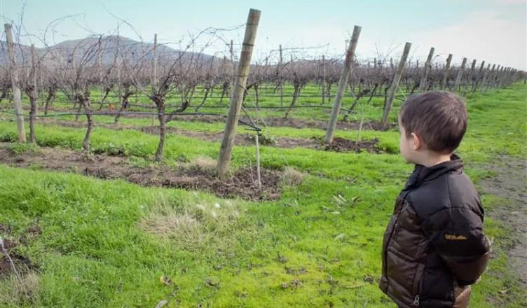 rota dos vinhos do Chile