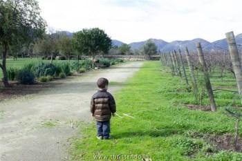 Vinicola Organica Emiliana Casablanca Chile 006 350x233 Vinícolas no Chile: Tour degustação na Emiliana