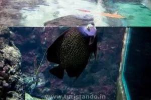 Zoo e Aquario 29nov2015 29 300x200 O Aquário de Berlim