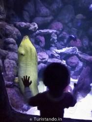 Aquario SPcomCriança Turistando.in 28 188x250 São Paulo com crianças: 25 lugares para levar os filhos nas férias