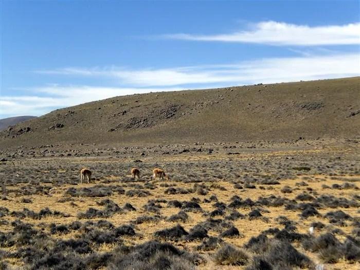 Colca trip 06ago2011 10 8on8: A beleza do Vale do Colca, no Peru, em 8 fotos