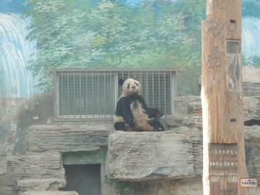 Mais do Panda
