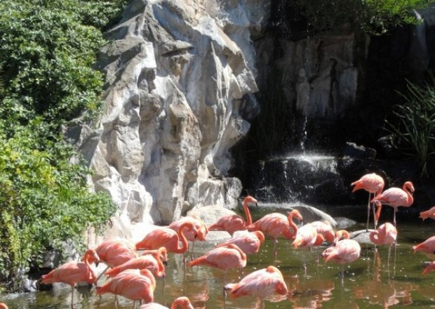 Temaiken - conheça o famoso bio parque de Buenos Aires