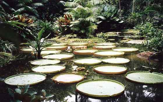 parque botanico de singapur
