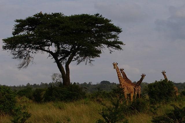parque-nacional-nairobi