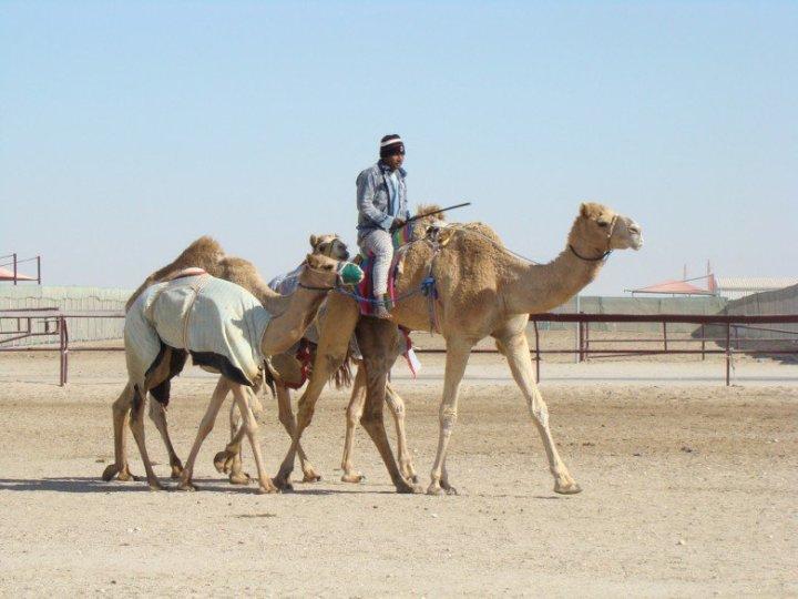 aventura en Doha