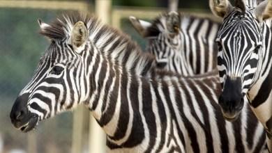 Photo of حديقة حيوانات أنطاليا تستأنف استقبال زوارها وفق تدابير كورونا