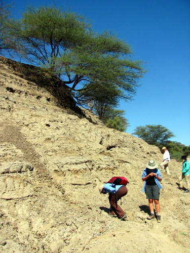 Lucy bends down to check the sediment for fossils