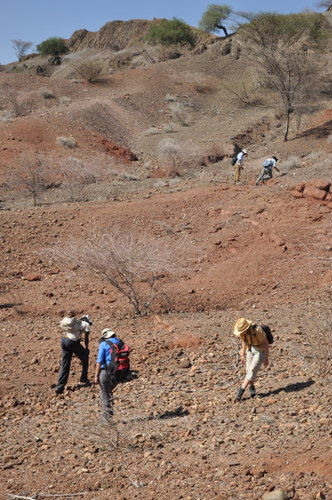 The students begin their search of the outcrops.