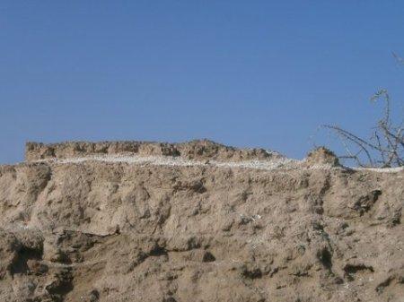 Layer of shells indicates the past lake shoreline.