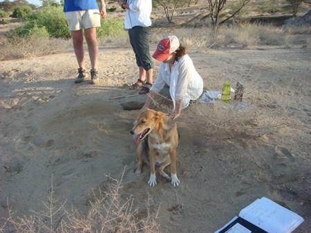 Anna brushing away sediment while Tom (TBI mascot) wonders what everyone is doing