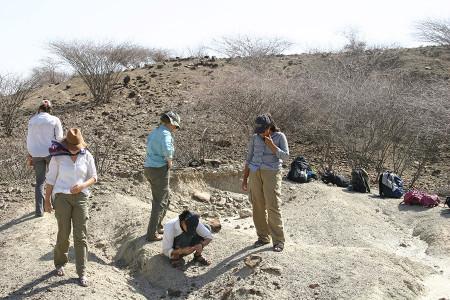 The survey area.