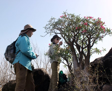 Joe and Kait collect photos and samples of the desert rose.