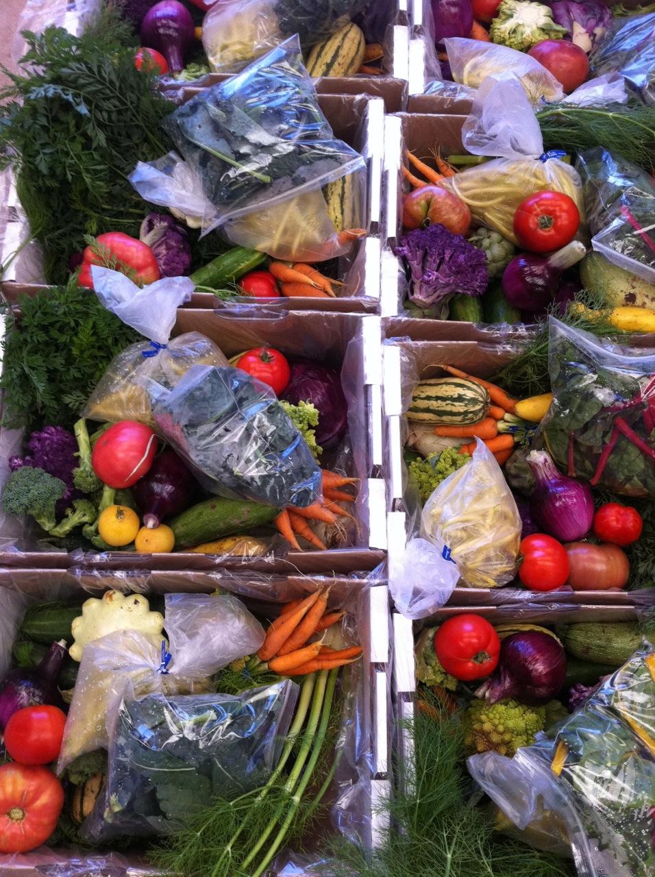 2011 CSA Newsletter, Week 12-13 – Fall Crops
