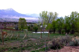 view across the farm, berries, pond, mountains