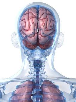 Beyin Hastalıkları