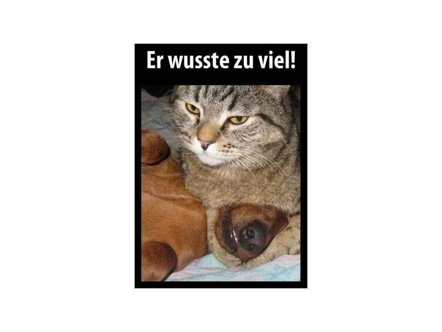 2873 Lustige Bilder Von Hund In 2020 Lustig