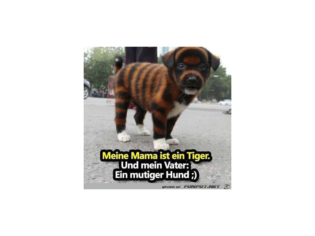 Whatsapp Profilbilder Kostenlos Bildergalerie Lustige