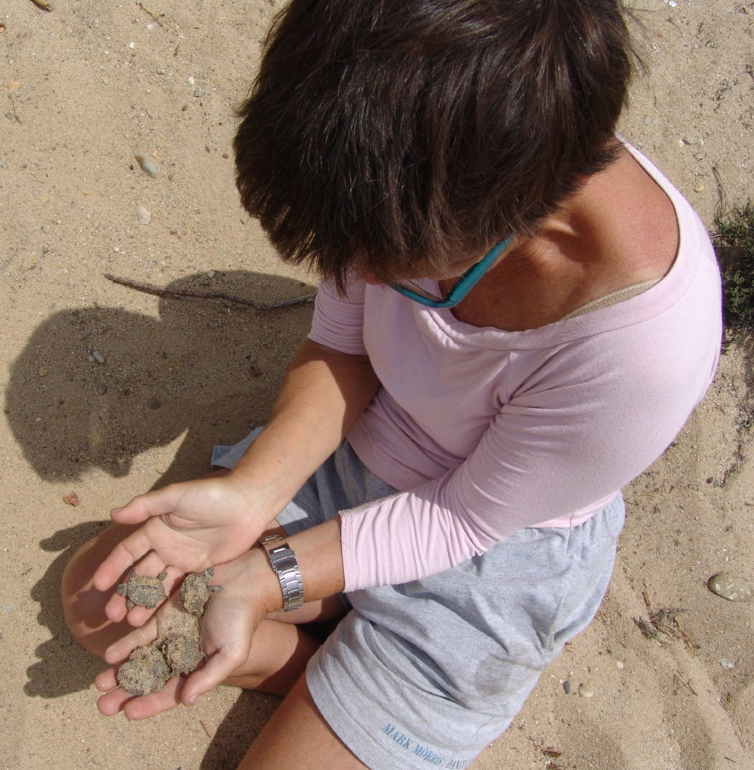 Becky Okrent Excavates Terrapin Hatchlings on Lieutenant Island