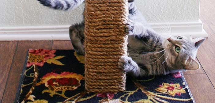 Kediler Neden Tırmalar