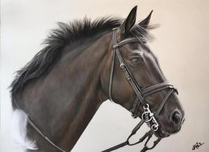 Cole. Laurens showjumper who she tragically lost at only 9yrs. Sophie did this pastel of him for her birthday. She included the white feather as one landed on him just before he passed away. A sign of the Angels.