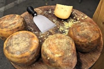 Il Caseificio Pinzani San Gimignano produce formaggi a base di latte crudo, pecorino toscano dei colli senesi