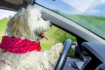 Hotel Pet Friendly in Toscana: dove andare in vacanza con Fido e i luoghi dove lasciarlo in pensione, coccolato da professionisti esperti