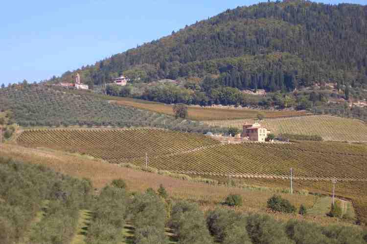 Fattoria I Veroni: il Chianti Rufina, vino d'annata, più servito nei ristoranti fiorentini
