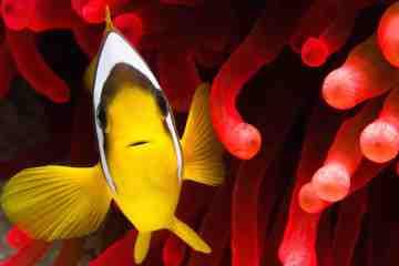 L'Acquario di Livorno è un'esperienza sensazionale per scoprire 2000 animali marini di 300 specie diverse tra cui gli squali pinna nera
