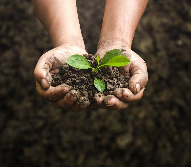 La biodinamica, la permacultura e la coltivazione idroponica, rappresentano alcune tecniche alternative all'agricoltura tradizionale svillupate recentemente