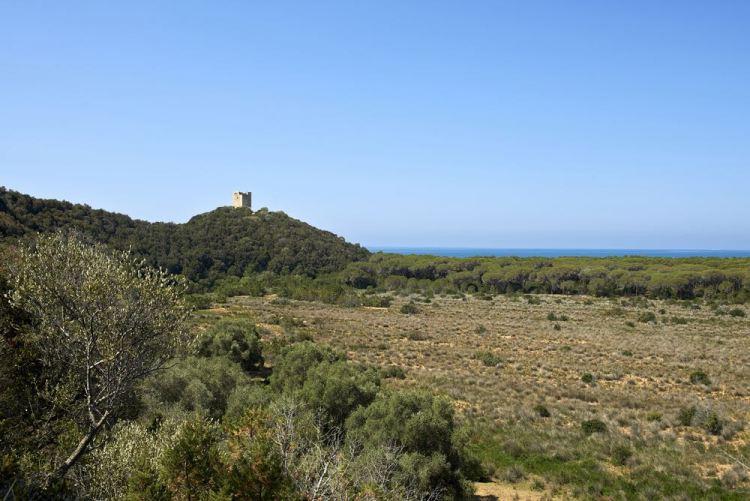 La Torre di Alberese o Torre di San Rabano si trova nel Parco Naturale della Maremma