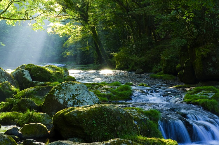 bosco_fiume