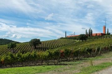 Rocca di Frassinello è una delle cantine più spettacolari del mondo, progettata da Renzo Piano e immerso tra le belle colline della Maremma