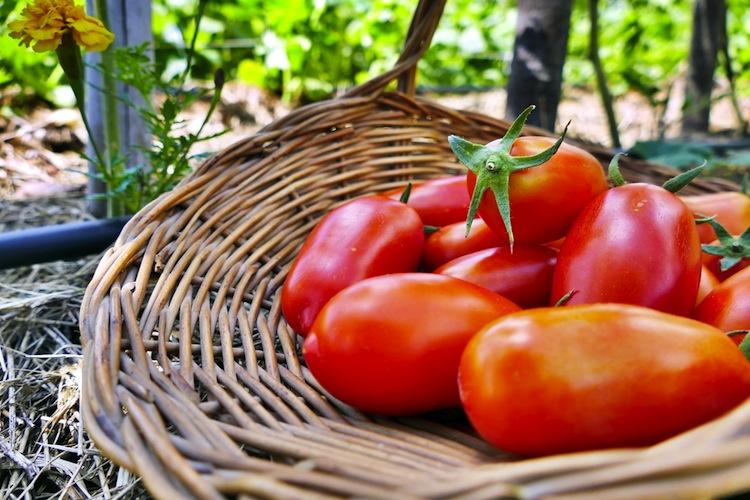 Cosa è la biocosmesi? I prodotti che impiega sono tutti provenienti da agricoltura biologica? Scopriamolo insieme a Biofficina Toscana