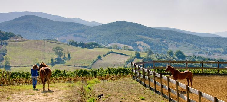 La DOC di Bolgheri è oggi una delle Denominazioni di Origine più importanti della Toscana, grazie anche al lavoro di aziende biologiche e biodinamiche.