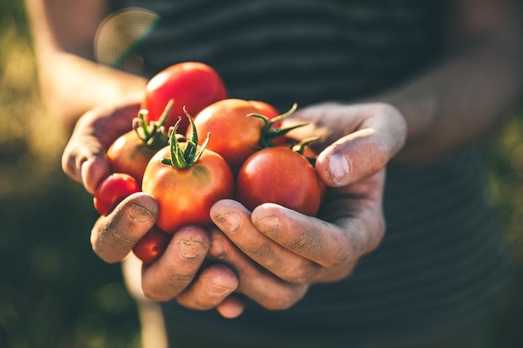 Desideri prodotti biologici e freschi, ma non hai un orto? Problema risolto, grazie al progetto che ti permette di adottare un orto da casa