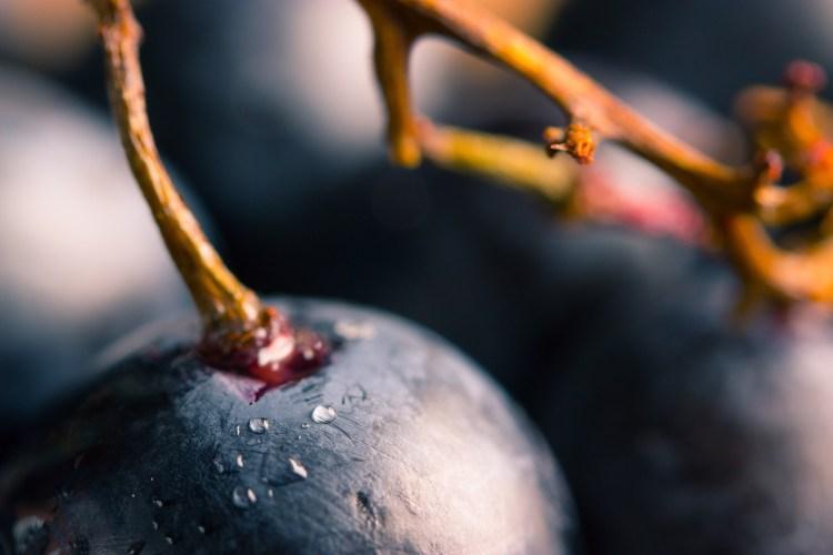 Chicco di uva per produrre il Morellino di Scansano