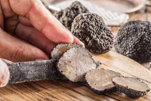 Il tartufo in Toscana è un prodotto molto pregiato che cresce spontaneo in 6 zone tra le provincie di Pisa, Siena, Arezzo e Grosseto