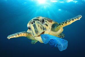 Toscana, la prima regione plastic free