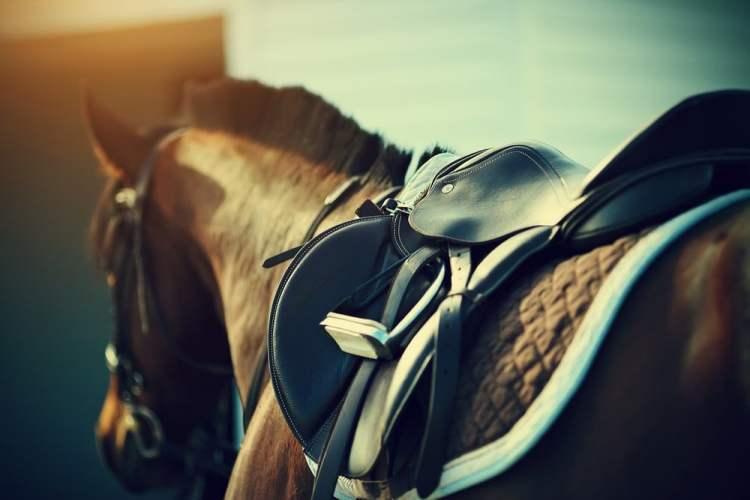 Cavallo di Matteo Giunti, cavaliere di fama internazionale