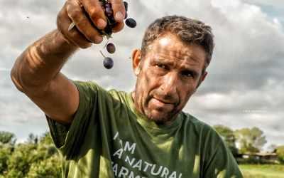 L'agronomo Luigi Antonelli de La Fattoria la Maliosa in Maremma è specializzato in olivocultura toscana