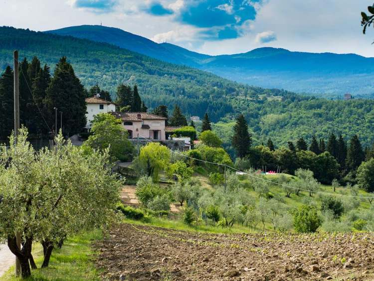 Peter in Florence il primo gin toscano è distillato da Stefano Cicalese nel Podere Castellare a Pelago (Firenze)