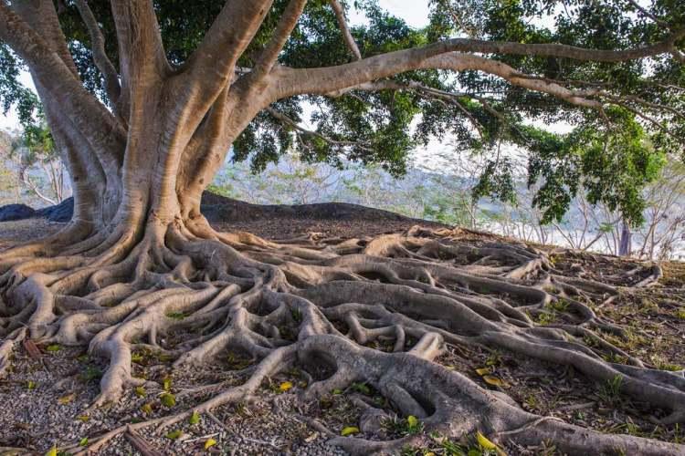 Le radici dell'albero sono simbolo di vita.