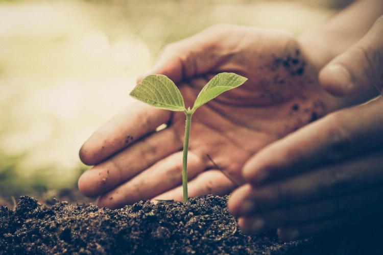 Terreno fertile per agricoltura biologoca