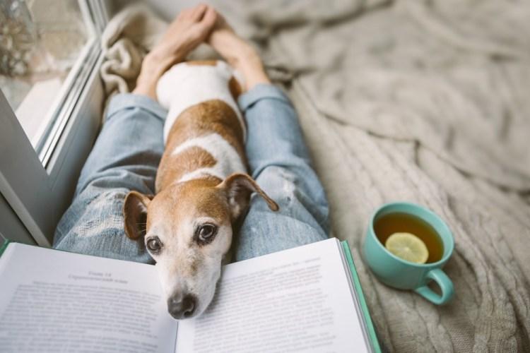 Leggere libro accanto alla finestra con cane