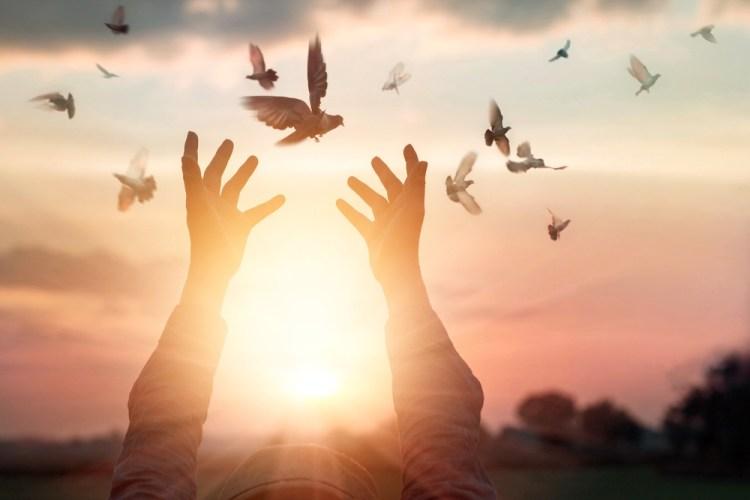 Mani al tramonto che liberano colombe