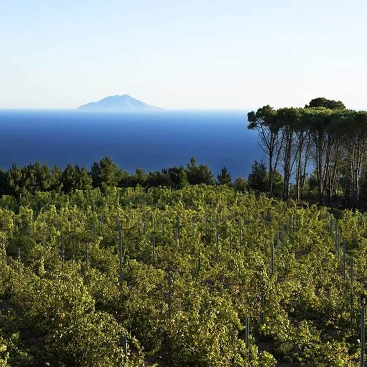 La Tenuta delle Ripalte all'Isola d'Elba è una delle migliori cantine in Toscana per degustazioni di vino