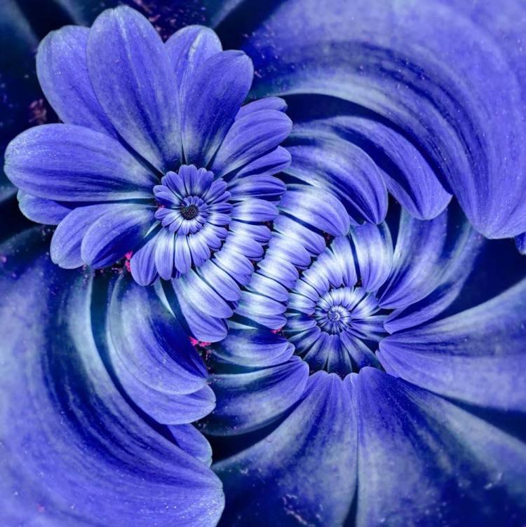 Doppia spirale in fiori color magenta