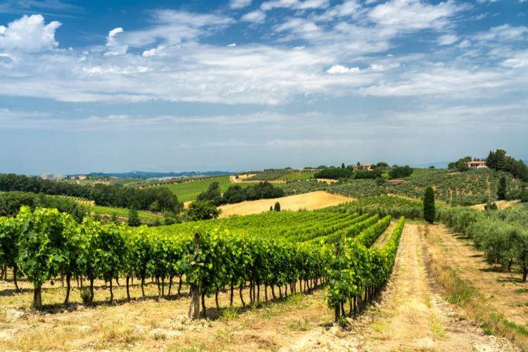 Vigne e colline sulla strada tra Certaldo e Gambassi Terme in Valdelsa