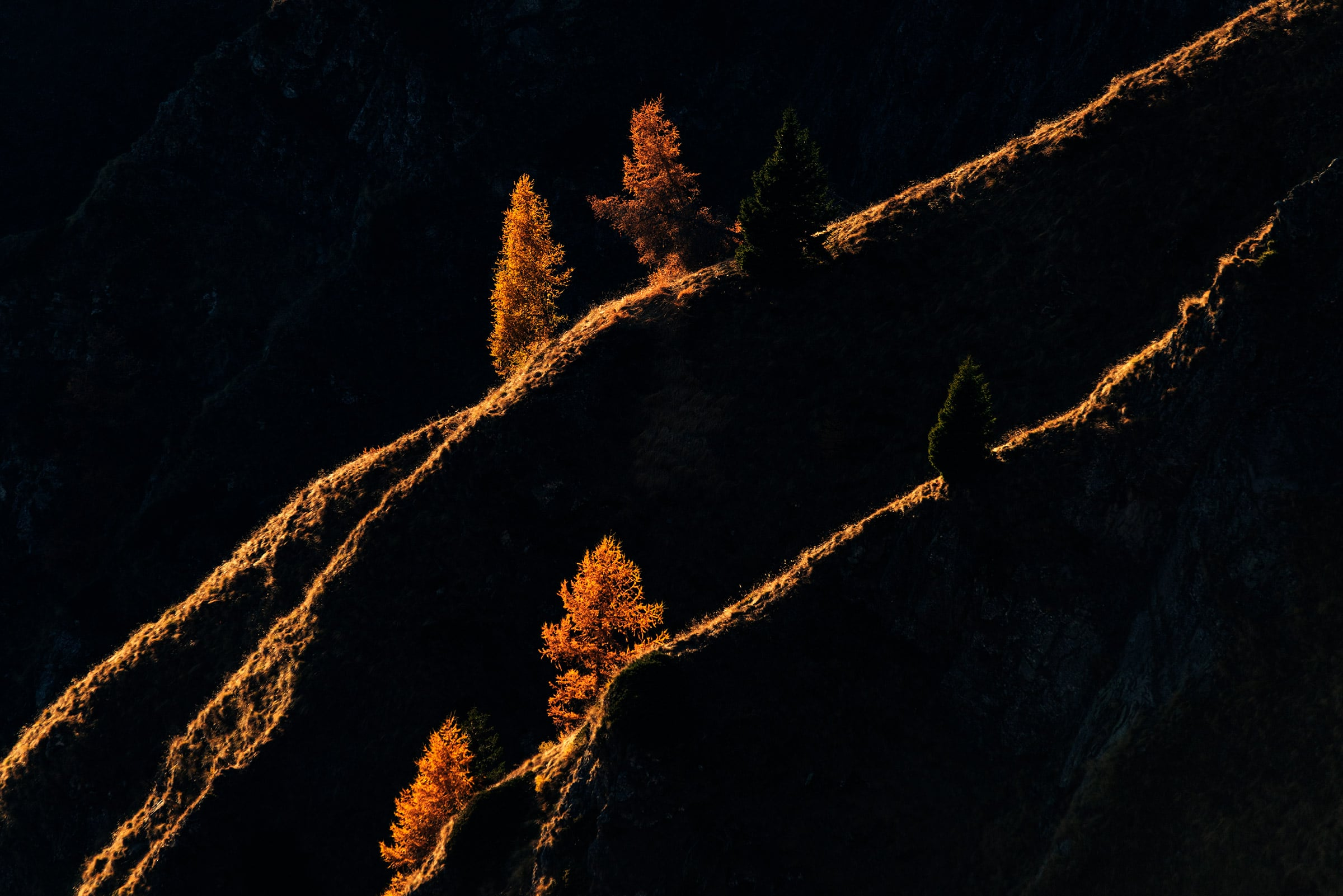Trees in the Dolomites at Sunset in backlit
